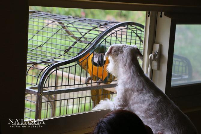 寵物友善民宿│宜蘭冬山│微陽花弄~擁有可愛小庭院和泡腳池的溫馨民宿推薦含豐盛早餐