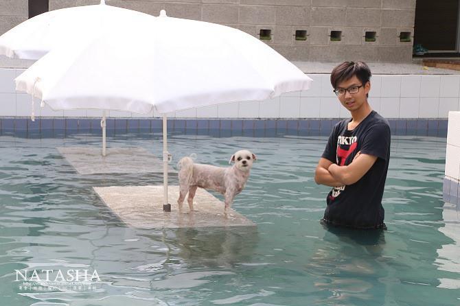寵物餐廳│寵物遊泳│台中南區美食│樂逗森林~打造寵物專屬villa高級泳池自助洗及寵物安親住宿