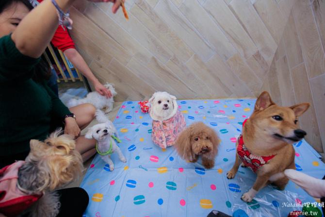 寵物友善餐廳│台北大安捷運站美食│yoh 曜日義式餐酒館~寵物專屬包廂還有提供寵物餐