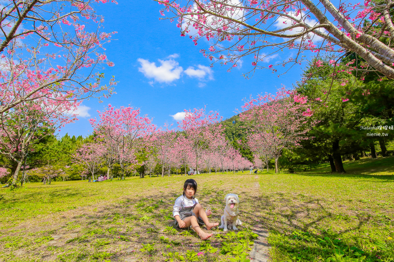 九族文化村攻略 九族櫻花季、門票優惠情報、纜車 遊樂設施 寵物友善資訊