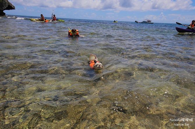 寵物旅遊│小琉球│和狗狗一起划獨木舟出海浮淺看海龜18