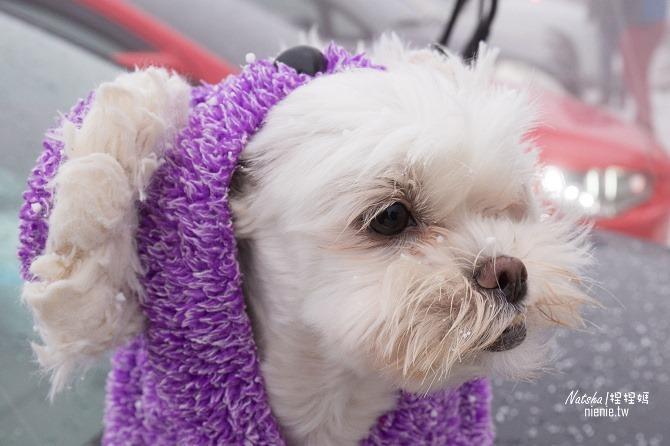合歡山賞雪│寵物賞雪│賞雪攻略雪鍊租售及寵物追雪必備物品清單03