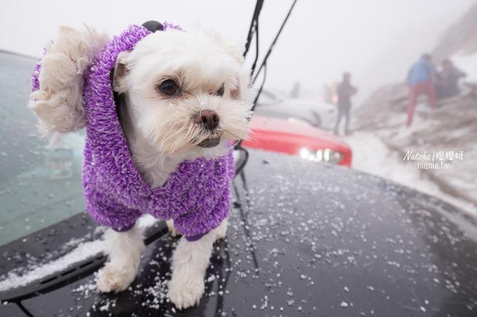 合歡山賞雪│寵物賞雪│賞雪攻略雪鍊租售及寵物追雪必備物品清單04