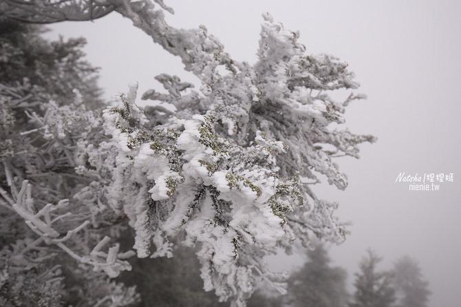 合歡山賞雪│寵物賞雪│賞雪攻略雪鍊租售及寵物追雪必備物品清單07