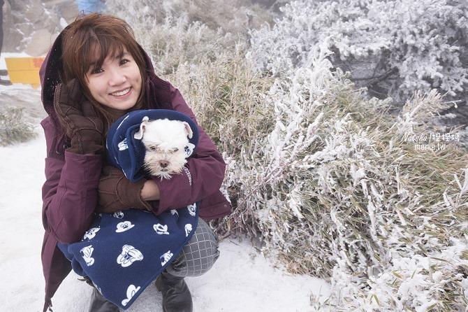 合歡山賞雪│寵物賞雪│賞雪攻略雪鍊租售及寵物追雪必備物品清單09