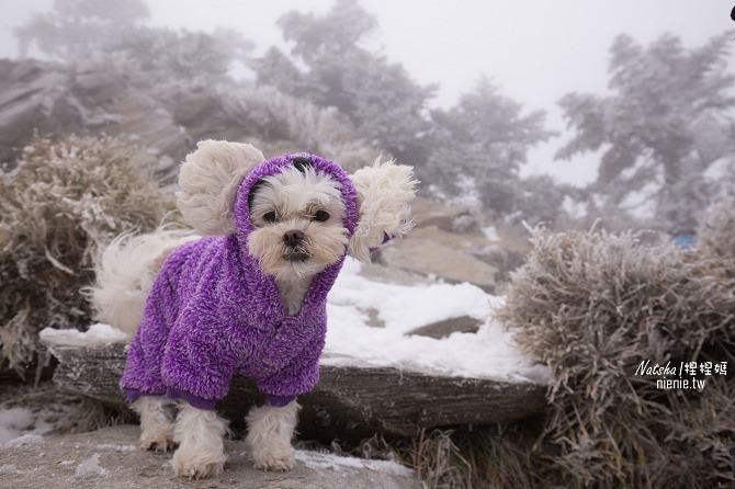 合歡山賞雪│寵物賞雪│賞雪攻略雪鍊租售及寵物追雪必備物品清單15