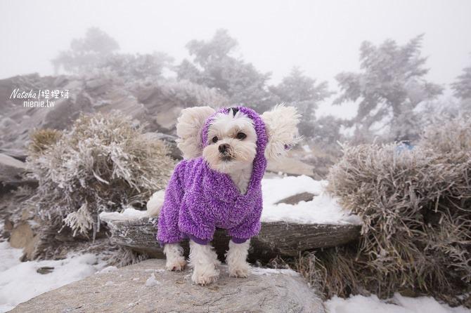 合歡山賞雪│寵物賞雪│賞雪攻略雪鍊租售及寵物追雪必備物品清單16