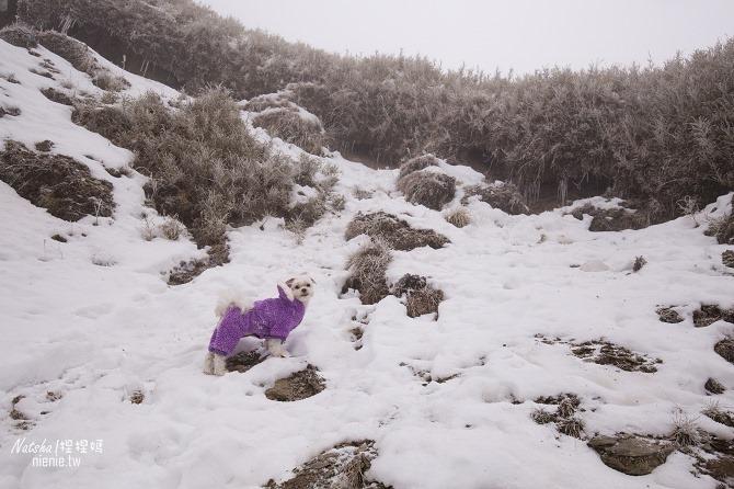合歡山賞雪│寵物賞雪│賞雪攻略雪鍊租售及寵物追雪必備物品清單19