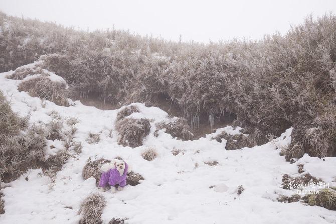 合歡山賞雪│寵物賞雪│賞雪攻略雪鍊租售及寵物追雪必備物品清單20