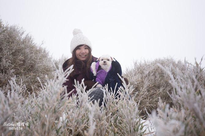 合歡山賞雪│寵物賞雪│賞雪攻略雪鍊租售及寵物追雪必備物品清單24