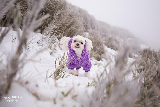 合歡山賞雪│寵物賞雪│賞雪攻略雪鍊租售及寵物追雪必備物品清單25