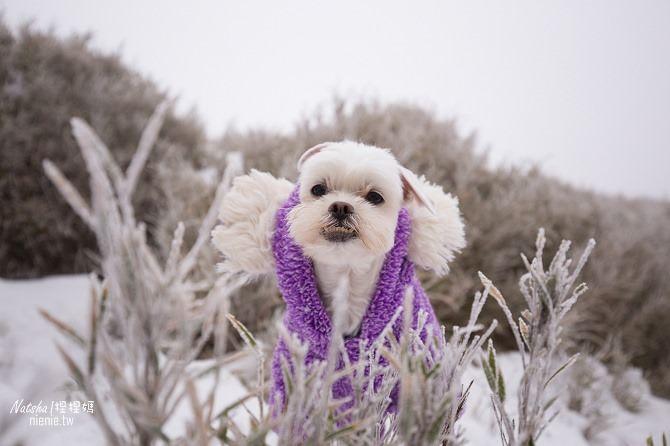 合歡山賞雪│寵物賞雪│賞雪攻略雪鍊租售及寵物追雪必備物品清單26