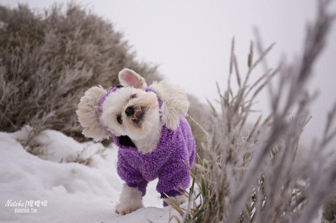 合歡山賞雪│寵物賞雪│賞雪攻略雪鍊租售及寵物追雪必備物品清單27