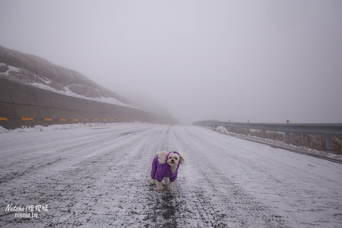合歡山賞雪│寵物賞雪│賞雪攻略雪鍊租售及寵物追雪必備物品清單29