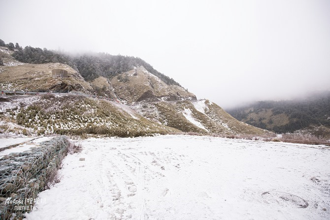 合歡山賞雪│寵物賞雪│賞雪攻略雪鍊租售及寵物追雪必備物品清單30