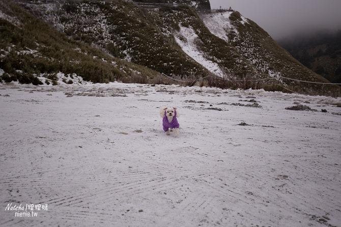 合歡山賞雪│寵物賞雪│賞雪攻略雪鍊租售及寵物追雪必備物品清單31