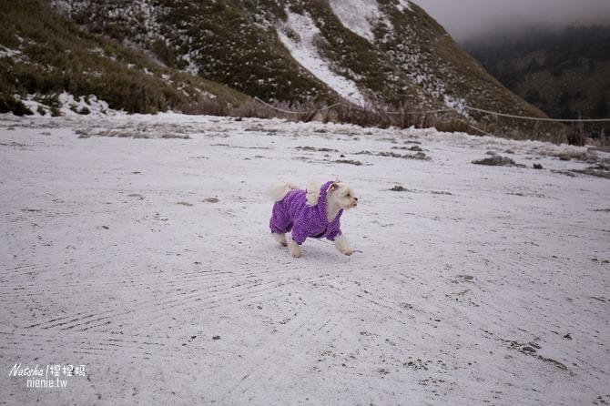 合歡山賞雪│寵物賞雪│賞雪攻略雪鍊租售及寵物追雪必備物品清單32