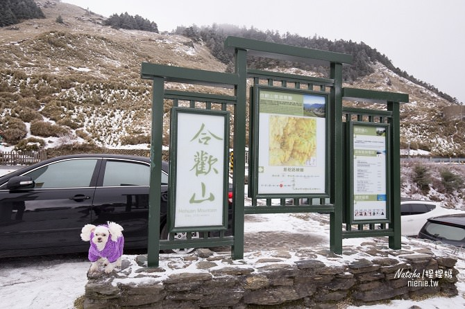 合歡山賞雪│寵物賞雪│賞雪攻略雪鍊租售及寵物追雪必備物品清單37
