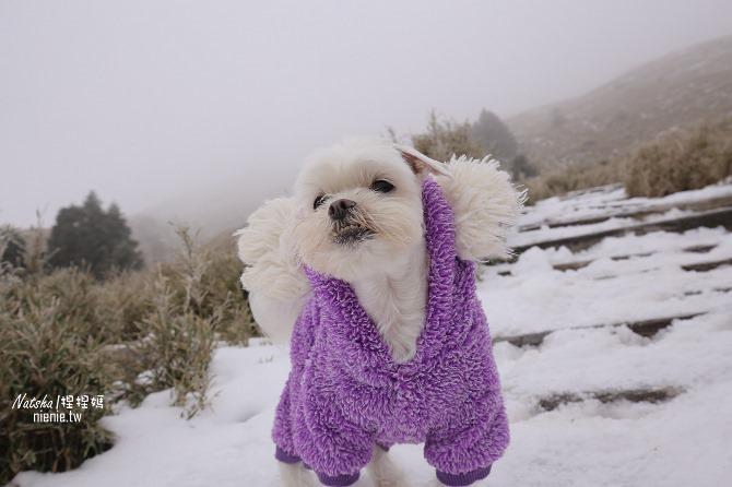合歡山賞雪│寵物賞雪│賞雪攻略雪鍊租售及寵物追雪必備物品清單51