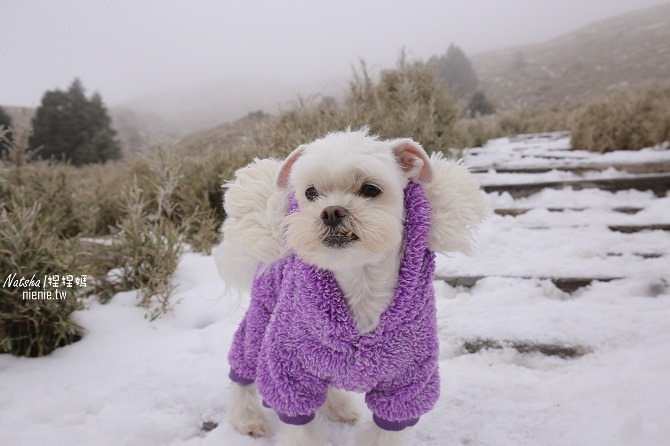 合歡山賞雪│寵物賞雪│賞雪攻略雪鍊租售及寵物追雪必備物品清單52