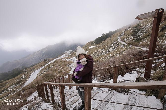 合歡山賞雪│寵物賞雪│賞雪攻略雪鍊租售及寵物追雪必備物品清單53