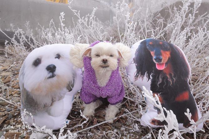 合歡山賞雪│寵物賞雪│賞雪攻略雪鍊租售及寵物追雪必備物品清單54