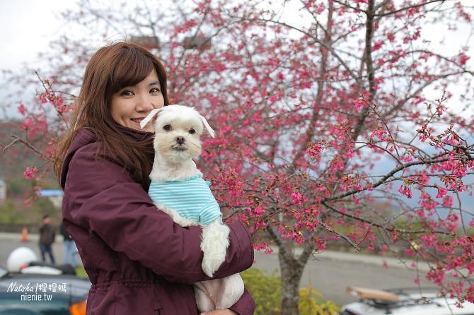 合歡山賞雪│寵物賞雪│賞雪攻略雪鍊租售及寵物追雪必備物品清單61