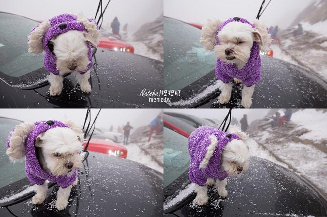 合歡山賞雪│寵物賞雪│賞雪攻略雪鍊租售及寵物追雪必備物品清單64