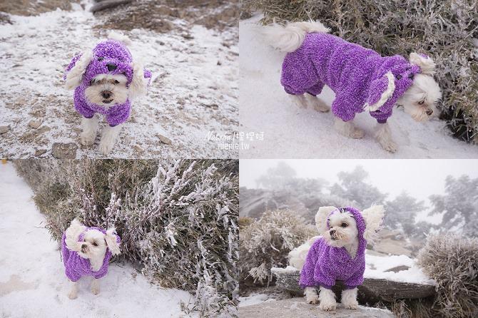 合歡山賞雪│寵物賞雪│賞雪攻略雪鍊租售及寵物追雪必備物品清單66
