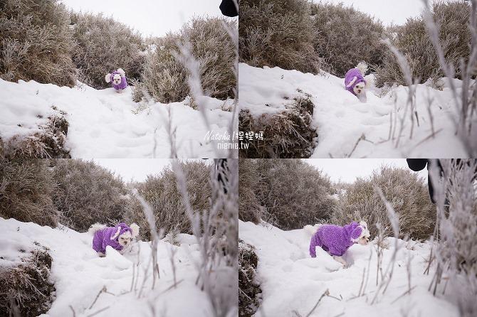 合歡山賞雪│寵物賞雪│賞雪攻略雪鍊租售及寵物追雪必備物品清單69
