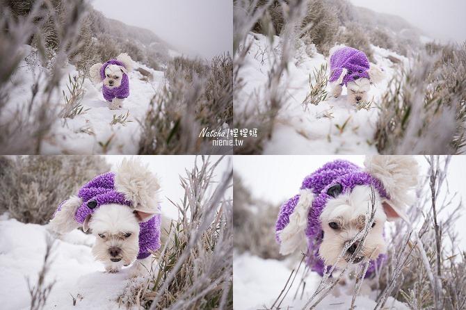 合歡山賞雪│寵物賞雪│賞雪攻略雪鍊租售及寵物追雪必備物品清單70