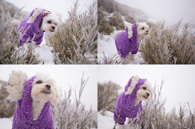 合歡山賞雪│寵物賞雪│賞雪攻略雪鍊租售及寵物追雪必備物品清單71