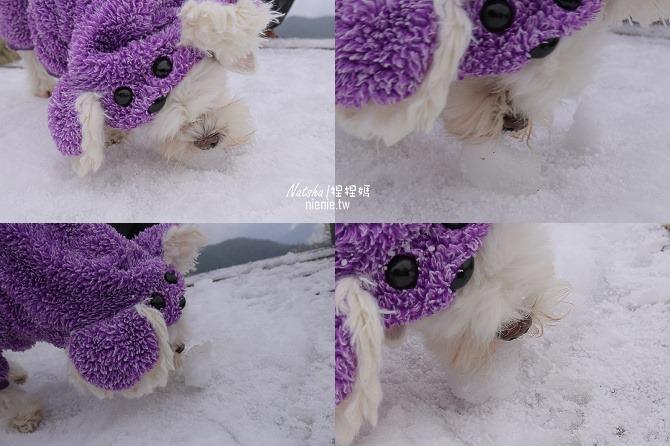 合歡山賞雪│寵物賞雪│賞雪攻略雪鍊租售及寵物追雪必備物品清單73