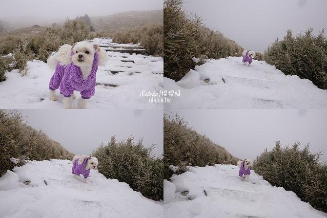合歡山賞雪│寵物賞雪│賞雪攻略雪鍊租售及寵物追雪必備物品清單74