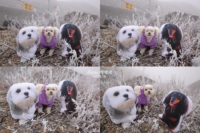 合歡山賞雪│寵物賞雪│賞雪攻略雪鍊租售及寵物追雪必備物品清單75