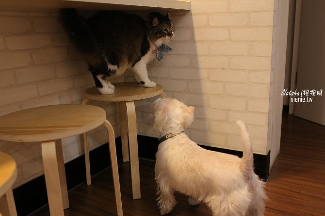 寵物餐廳│台南南區美食│Tnag項圈工廠寵物主題餐廳~提供寵物餐及客製化寵物真皮項圈19