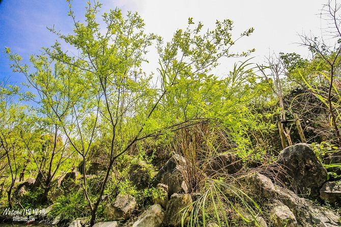 宜蘭冬山新景點│冬山河生態綠舟│寵物旅遊│親子旅遊│歷經19年規劃建置的蘭陽最美景點137