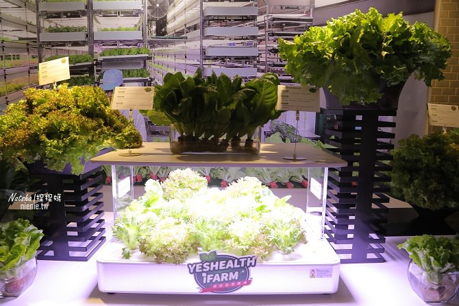 蔬菜推薦│源鮮智慧農場~全環控仿自然環境結合益生菌發酵肥料種植的純淨安全蔬菜09