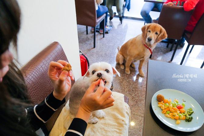 寵物友善餐廳│台南中西區美食│伍零壹寵物友善餐廳~餐點份量好吃大碗且推廣浪浪犬貓領養的愛心餐廳推薦11