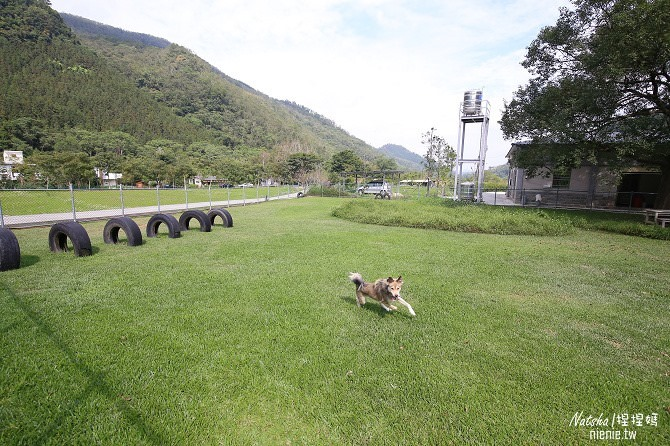 寵物友善民宿│苗栗。南庄│逗號民宿~全台最受歡迎的寵物友善民宿。寵物專屬草皮及自助澡堂