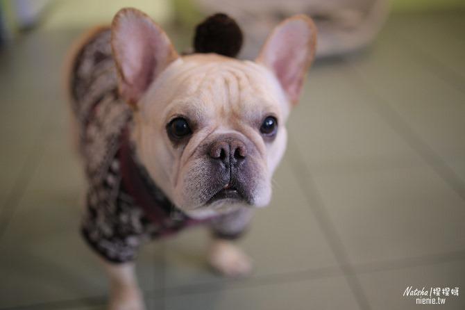 寵物餐廳│台南北區美食│肥窩咖啡~超精緻的寵物餐及可愛店狗10