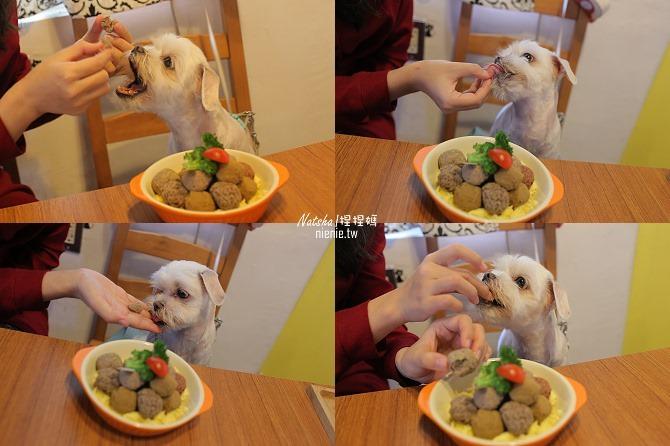 寵物餐廳│台南北區美食│肥窩咖啡~超精緻的寵物餐及可愛店狗45