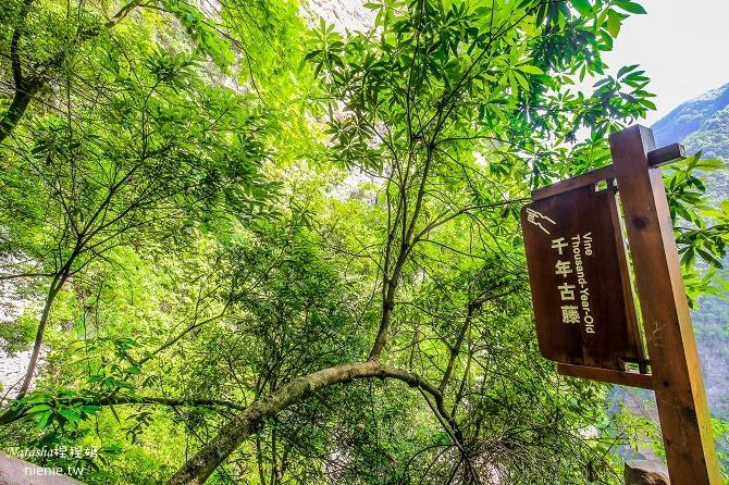 大陸張家界五天四夜│景點推薦│張家界大峽谷~世界最長玻璃橋體驗峡谷高空滑索及百米溜滑梯27