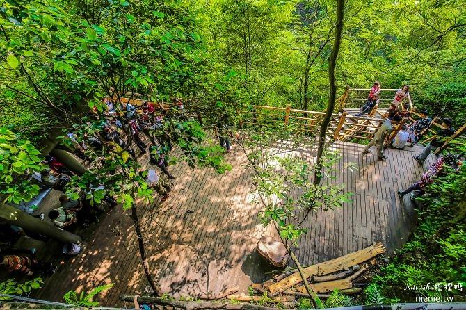 大陸張家界五天四夜│景點推薦│張家界大峽谷~世界最長玻璃橋體驗峡谷高空滑索及百米溜滑梯28