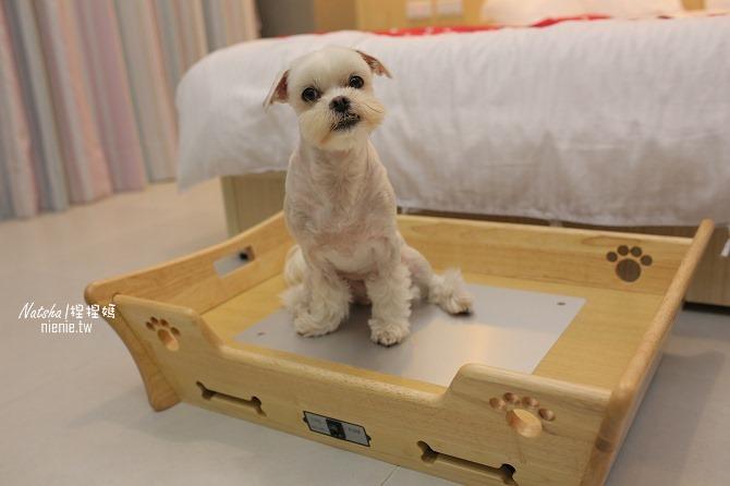 寵物床│Beetle的寵物專用冰暖床~對抗寒流及酷夏最佳節電環保床一天不到5元17