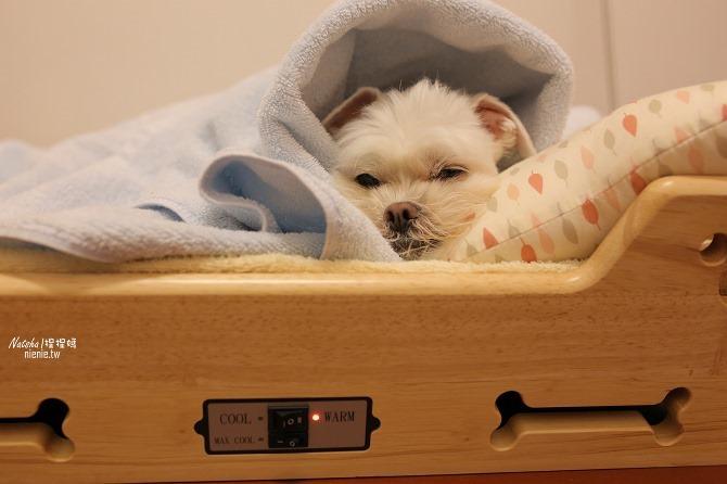 寵物床│Beetle的寵物專用冰暖床~對抗寒流及酷夏最佳節電環保床一天不到5元36