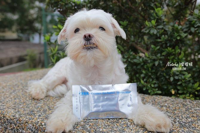 寵物益生菌│捏捏急性過敏治療分享│犬敏舒~專為犬貓設計的益生菌調節過敏體質及改變腸道菌相幫助消化吸收16