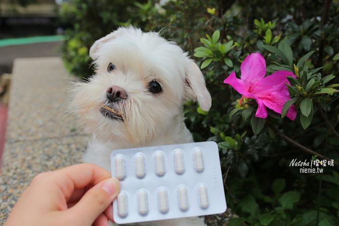寵物益生菌│捏捏急性過敏治療分享│犬敏舒~專為犬貓設計的益生菌調節過敏體質及改變腸道菌相幫助消化吸收33