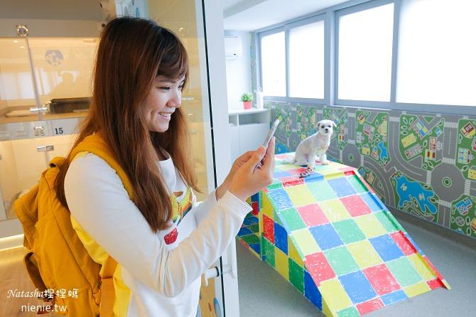 台中狗旅館-瑋特ㄚ狗生活館的寵物遊戲攝影監控