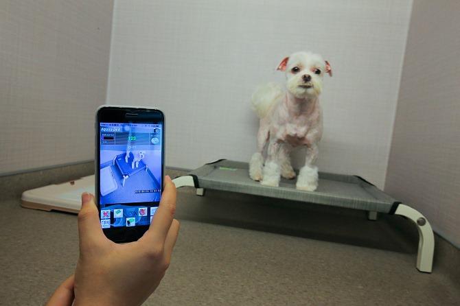 台中狗旅館-瑋特ㄚ狗生活館的攝影監控